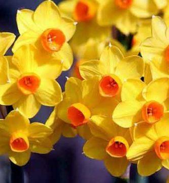 10 nombres de plantas ornamentales