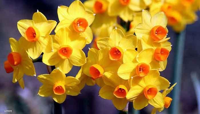 10 nombres de plantas ornamentales ecobotanico for Algunas plantas ornamentales