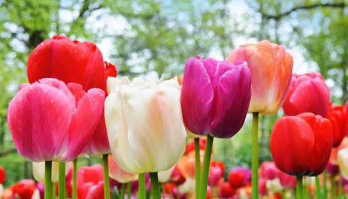 Ejemplos de plantas monocotiled neas ecobotanico - Cuales son las plantas con flores ...