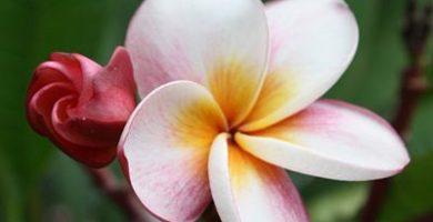 como nacen las flores