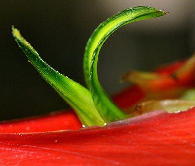 como nacen las plantas