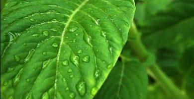 como respiran las plantas terrestres