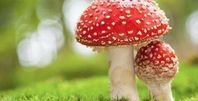 como respiran los hongos