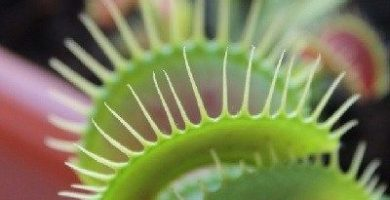 como se reproducen las plantas carnivoras