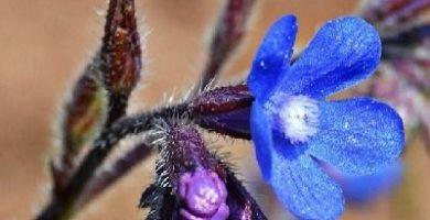 como se reproducen las plantas con flores