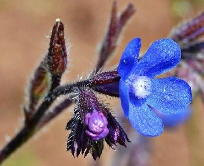Plantas que se reproducen sexualmente y asexualmente