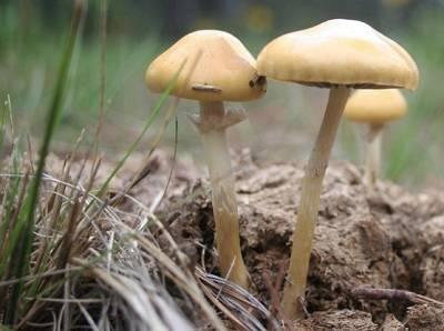 como se reproducen los hongos