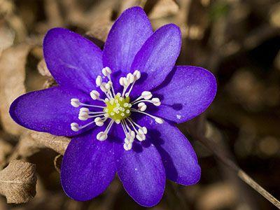 Snap plantas y flores hippeastrum vittatum photos on for Todas las plantas son ornamentales