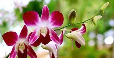 donde viven las orquideas