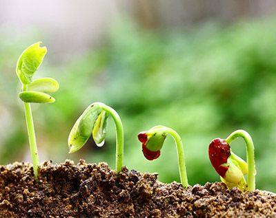 que necesitan las plantas para crecer y vivir
