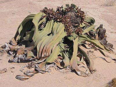 que plantas hay en el desierto