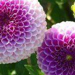 nombres de plantas que se reproducen sexualmente