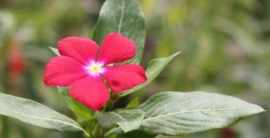 nombres de plantas con flores