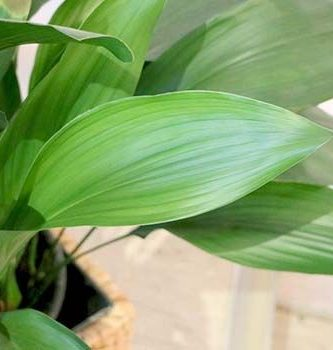 10 nombres de plantas comunes