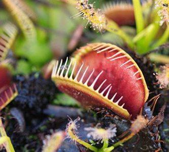 donde viven las plantas carnivoras