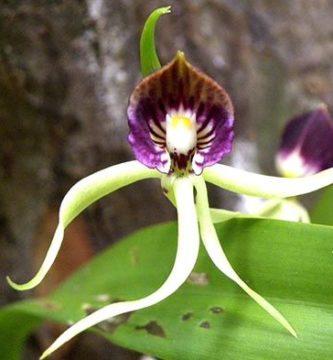 Orquideas raras